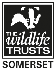 the wildlife somerset trust